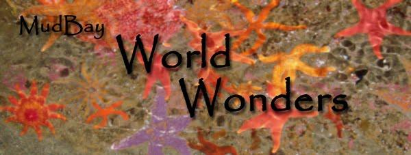 MudBay World Wonders