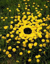 "Andy Goldsworthy's ""Dandelions and Hole"""
