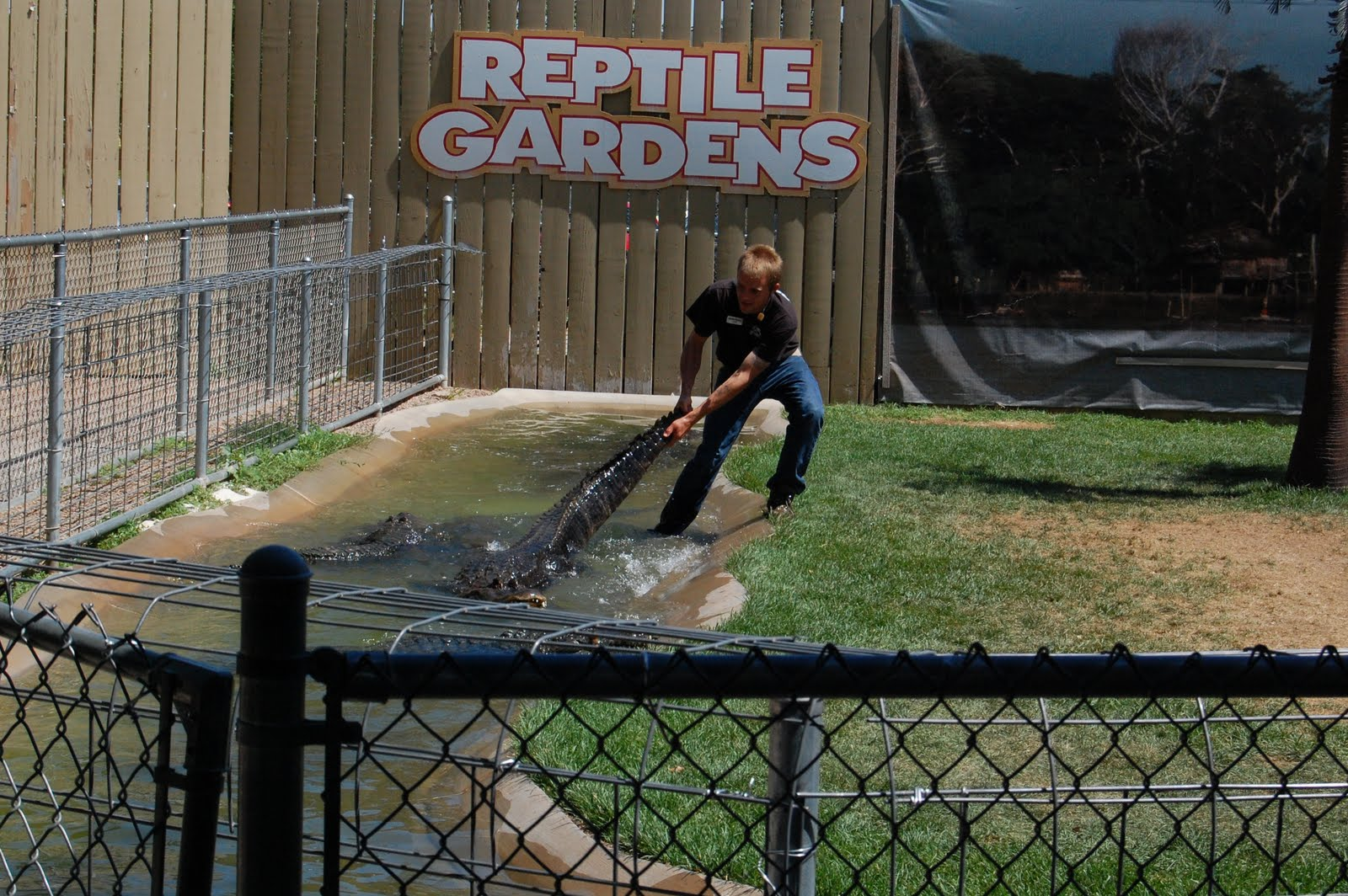 A Homegrown Life On The Road Reptile Gardens In Sd