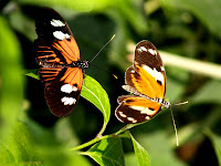 butterflies wallpaper cute butterfly backgrounds