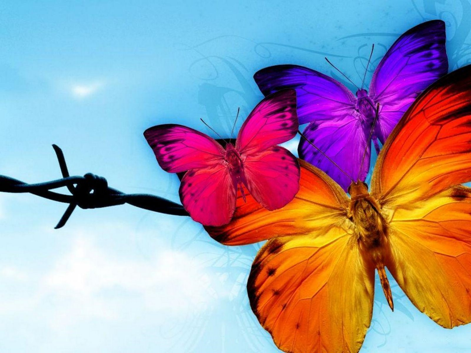 Pretty Butterfly Colorful Butterflies Wallpapers
