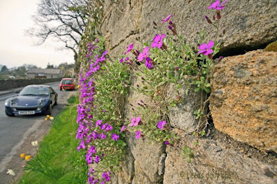 Wall Flowers Kildwick