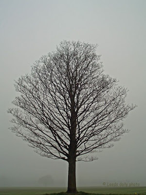 Tree in Mist Leeds