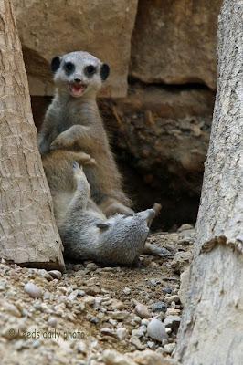 Meerkat Kits Leeds