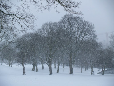 Trees in Snow Lister Park Bradford