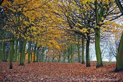 Autumn Trees Temple Newsam Yorkshire