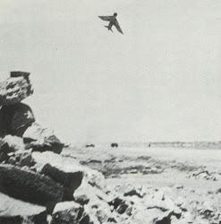 طائرات انجليزية في وضع قتالي مع ثوار الجبهة القومية