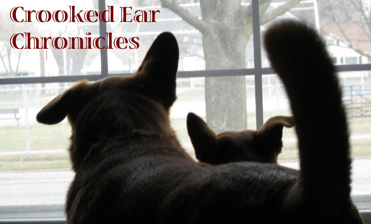 Crooked Ear Chronicles