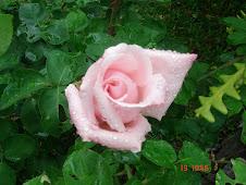 Nossas flores