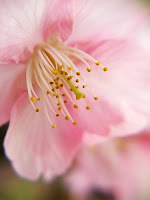 Lélekcsepp-készítés aromaterápiás illóolajokból