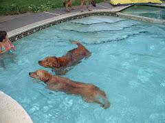 Visitors in Pool