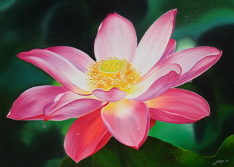 Name : Pink Lotus