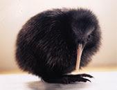 baby kiwi.