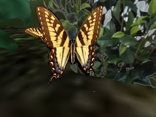 second life animals - butterfly