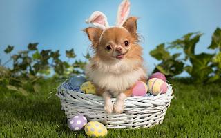 Gambar boneka anjing lucu