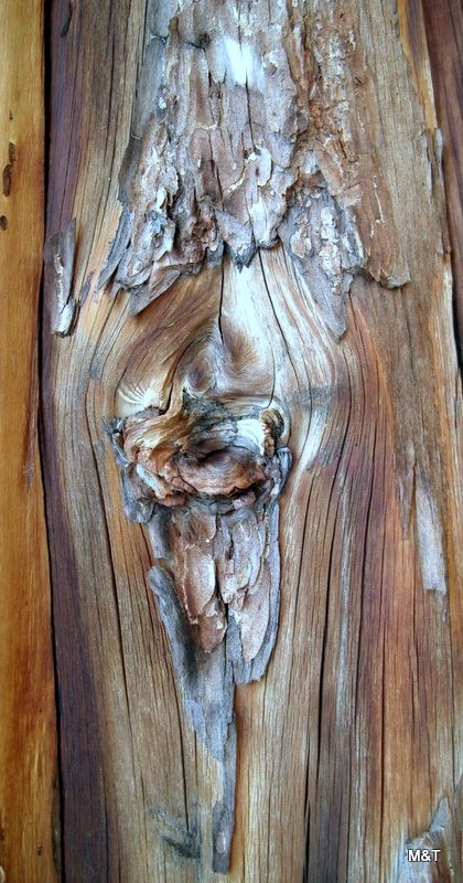 Nodi legnosi