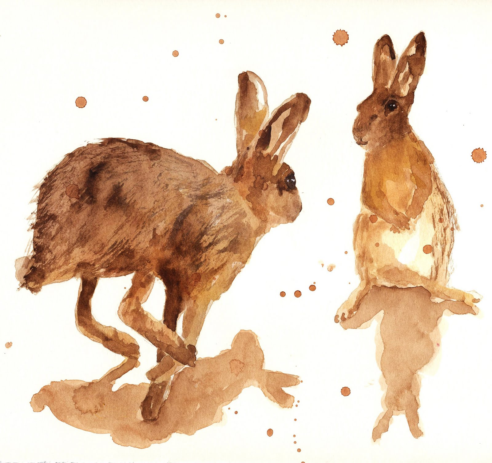 Hare PreservationTrust