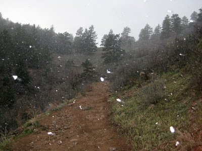 Mount Falcon, Snow Shower