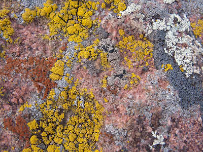 Lichen In Many Colors