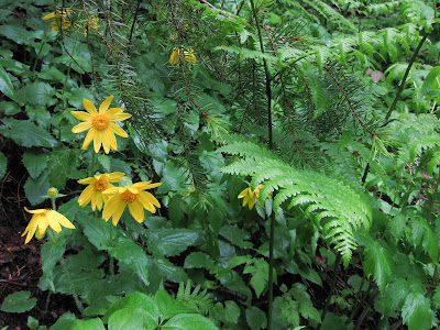 Saddle Rock Trail, Flowers And Ferns