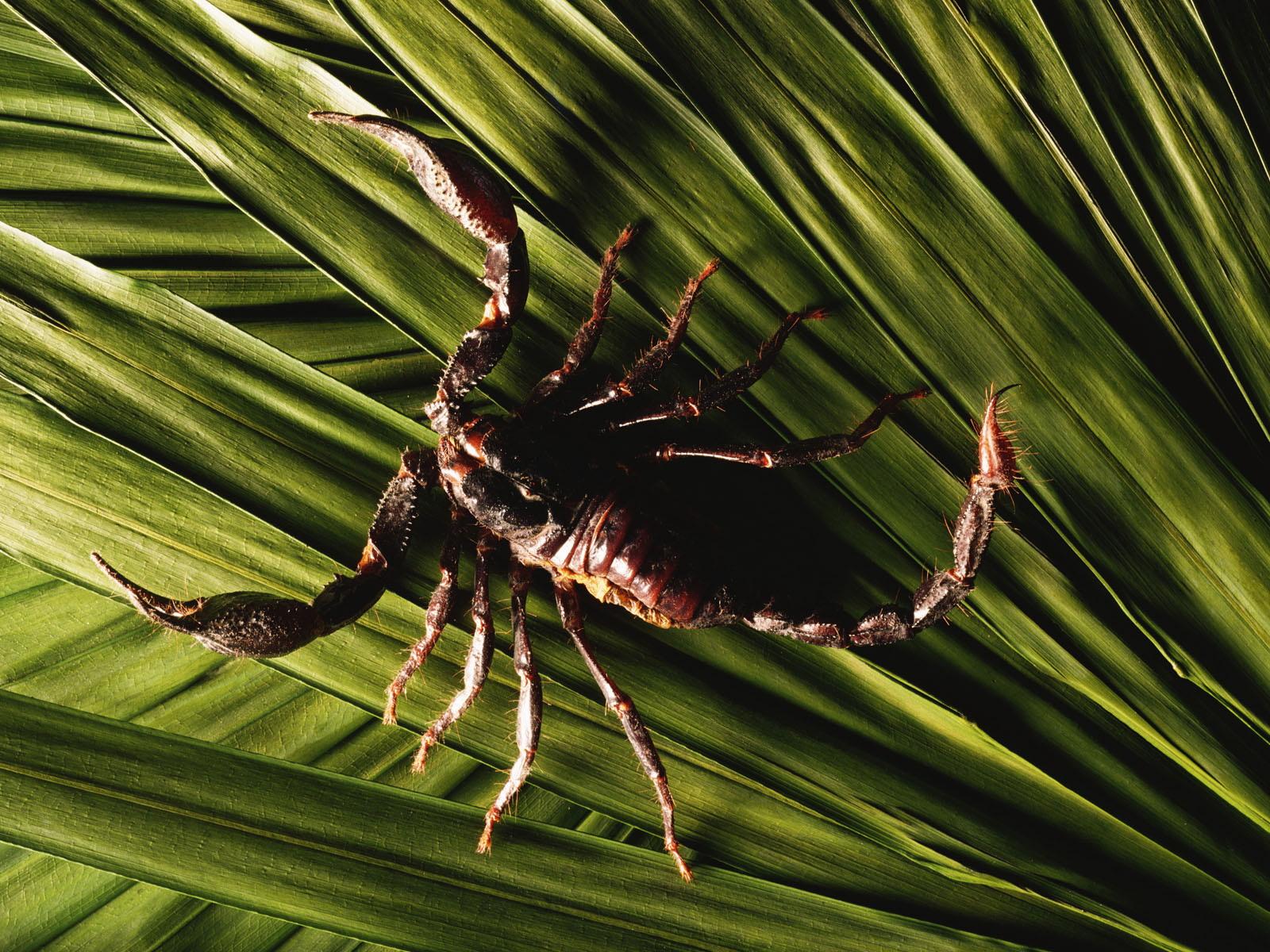 http://1.bp.blogspot.com/_rbTWXhUBelM/TUlP5ZyqqlI/AAAAAAAAAAs/cfZPdU9C6bg/s1600/scorpion_wallpaper.jpg