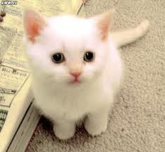 Angel Pakai Gucci!: Kucing Untuk Dijual