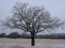 seasons at terra beata farm, our home