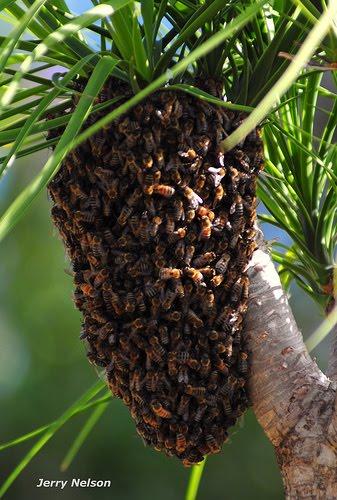 [bee+hive.jpg]