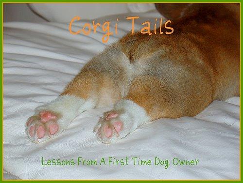 Corgi Tails