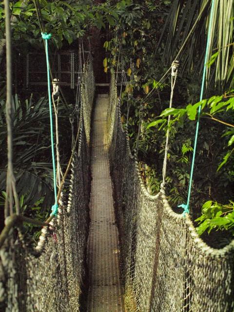 animals of rainforest pictures. animals in rainforest biome.