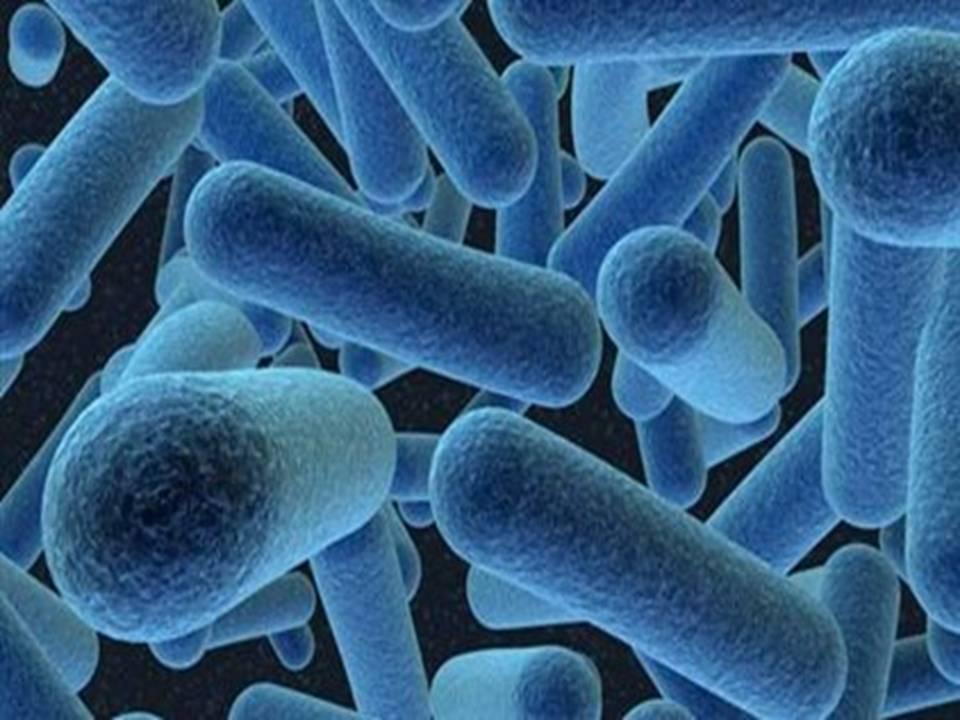 Τα μικροοργανισμοί μικρόβια που ζουν