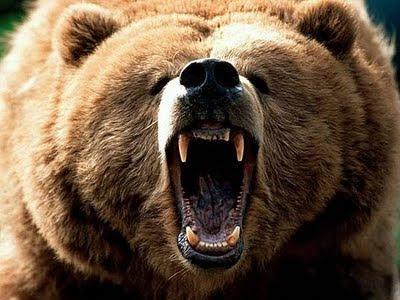 Roaring+Bear.jpg