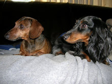 Cooper & Willie