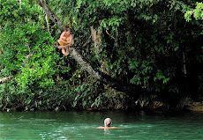 Tree jumping at Bonampak