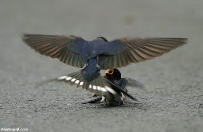 [Image: burung-2.jpg]