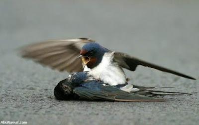 [Image: burung-4.jpg]