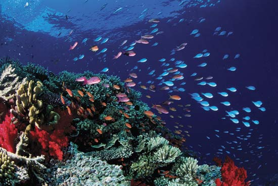 Great Barrier Reef which is the largest coral reef