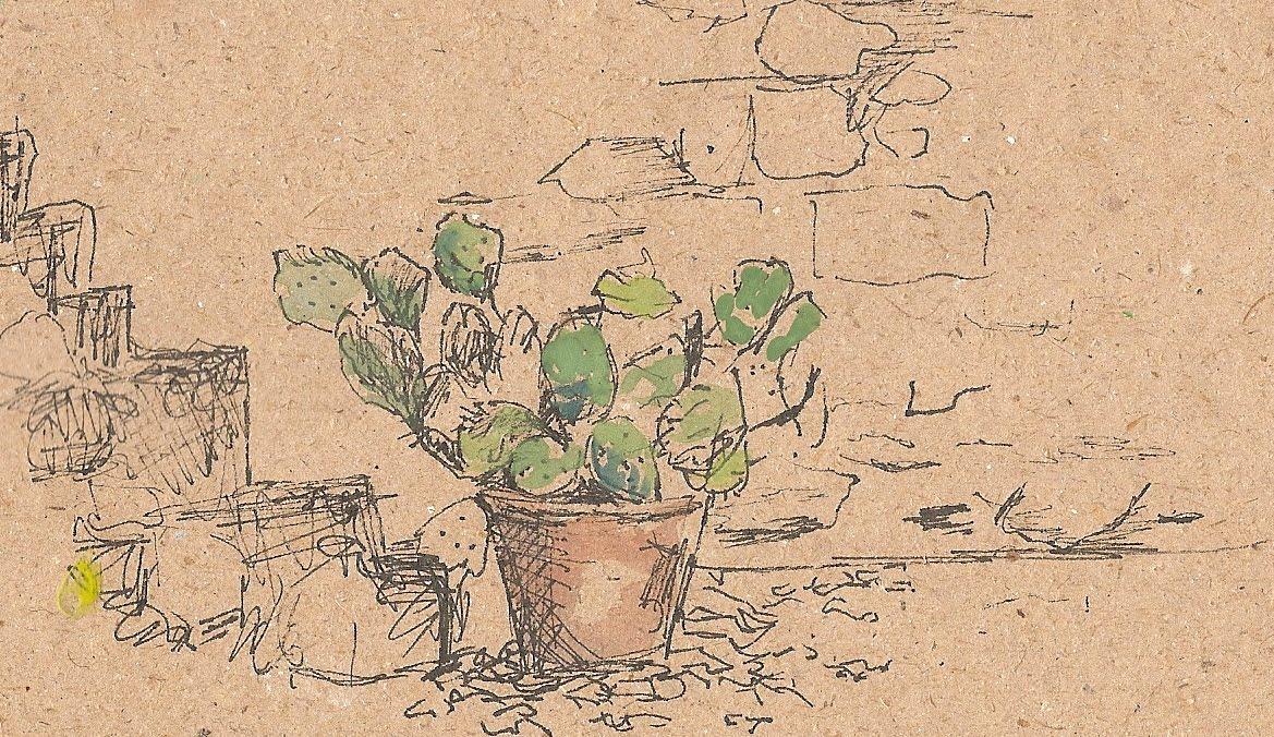 [cactus.jpg]