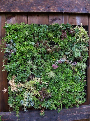 Balcony garden dreaming how to create a vertical garden for Balcony vertical garden