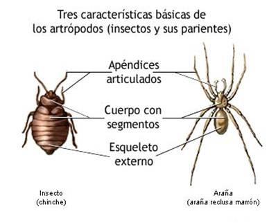 Características de los artrópodos