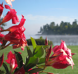 Mandavilla Flowers