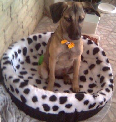 MINHA CACHORRINHA