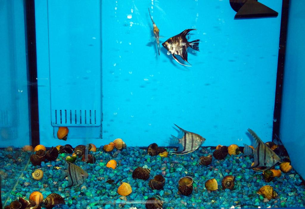 tropical fish at walmart - Here is classic tank at Wally 2017 - Fish Tank Maintenance
