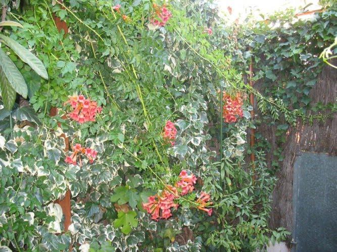 Memorias de una tomatera el jardin de las malas hierbas - Arreglar jardin abandonado ...