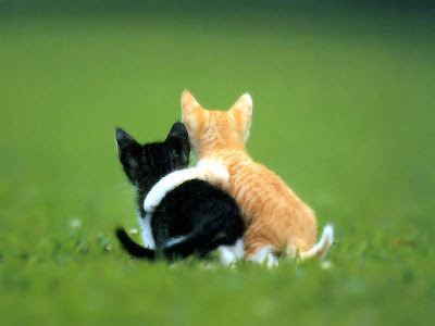 WALLPAPER-GAMBAR-ANIMAL-BINATANG: FRIENDSHIP CAT