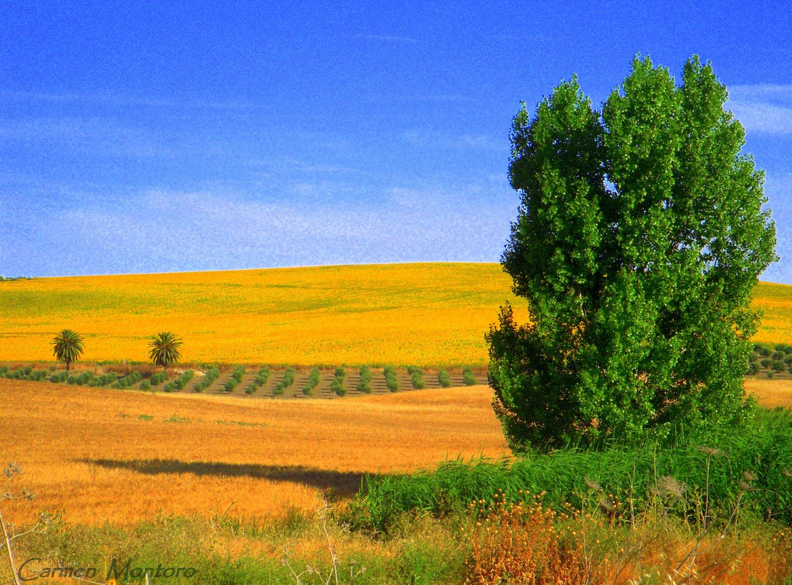 un sitio diferente: paisajes jiennenses
