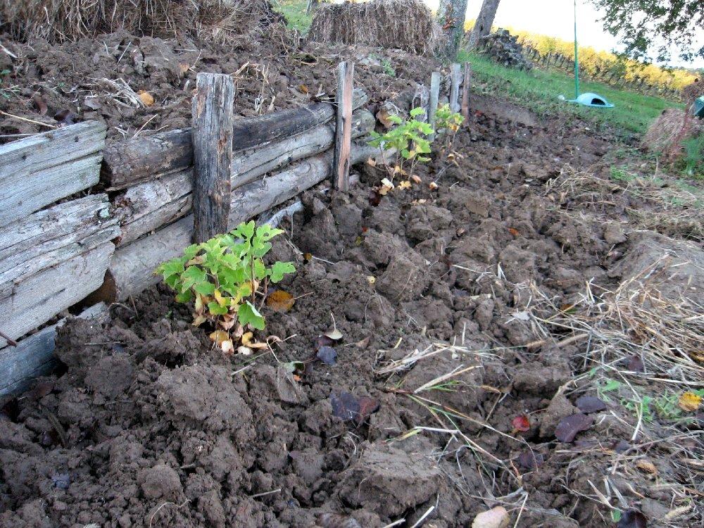 dr le de terre pour un potager le temps des semis et plantations d 39 hiver. Black Bedroom Furniture Sets. Home Design Ideas