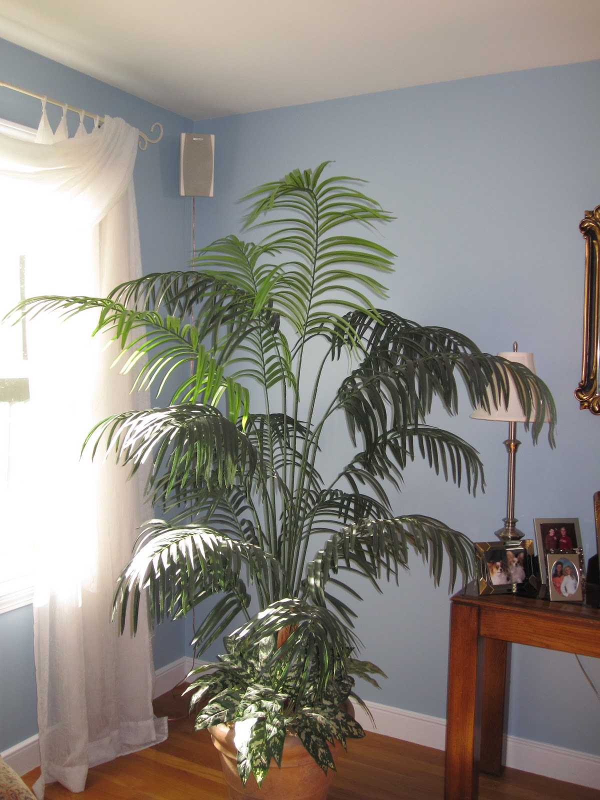 Plants in the living room modern house Large living room plants