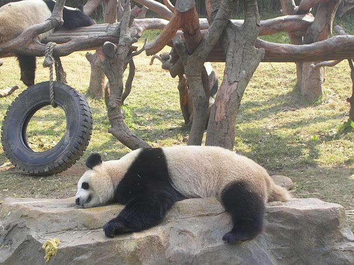 ~ It's Panda ~