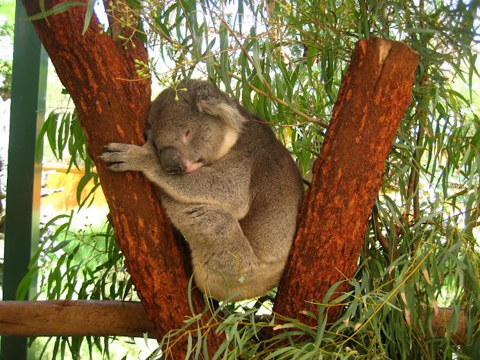 ~ It's Koala ~